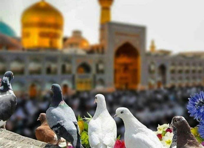 مشاوره کسب و کار در مشهد و خراسان